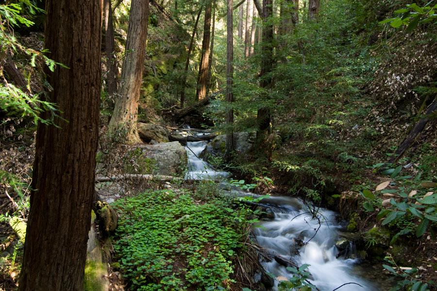 Park Big Sur Big Sur State Park d